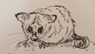 Possum sketch cropped